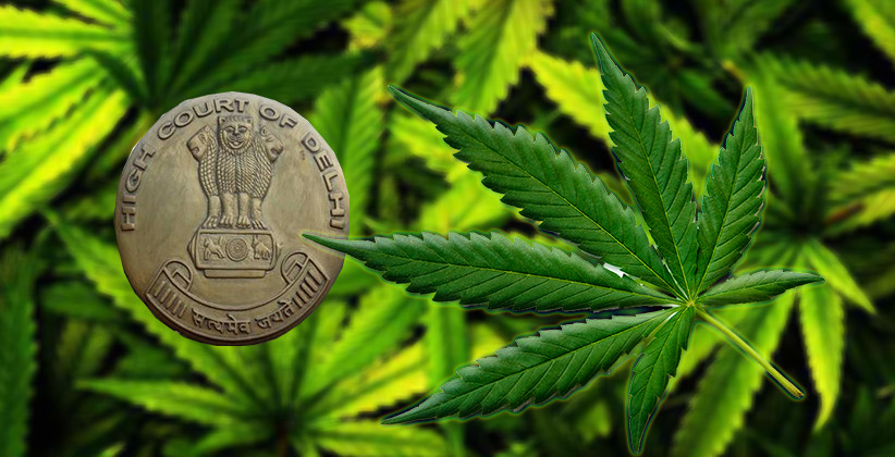 Plea Filed In Delhi High Court To Decriminalize Cannabis In India