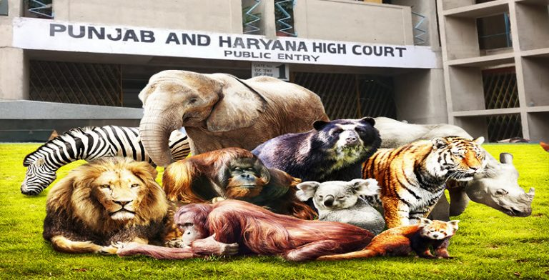 Punjab & Haryana High Court Declares All Animals As 'Legal Person' and All Citizens Their Guardians