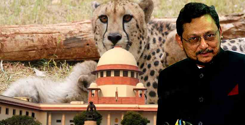 African Cheetah To Be Introduced In India On Experimental Basis: SC