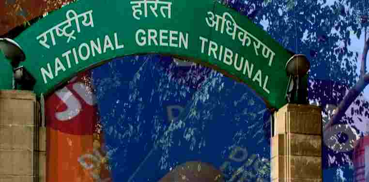 Pay Rs. 10 Lakhs Fine Says NGT To Reliance Jio For Cutting Trees Illegally For Laying Optical Fibre