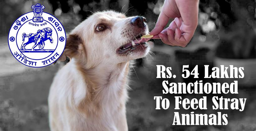 [COVID-19]: Odisha Government Sanctions Rs. 54 Lakhs To Feed Stray Animals