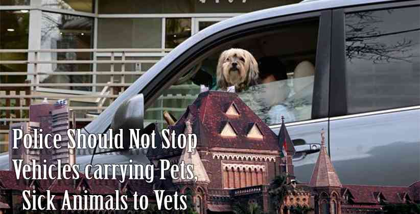 Bombay HC: Police Should Not Stop Vehicles carrying Pets, Sick Animals to Vets