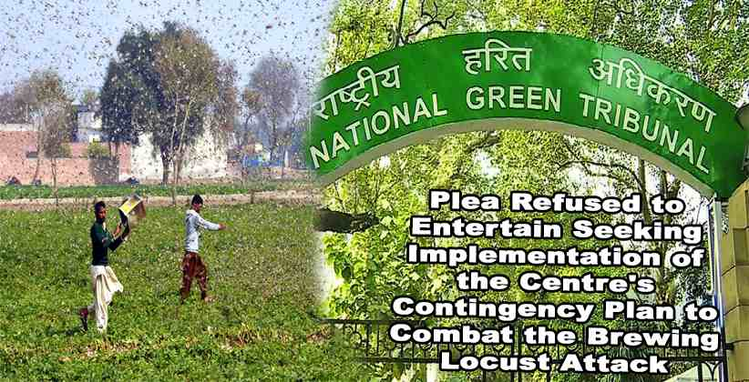 NGT Refuses Plea Contingency Plan Locust Attack