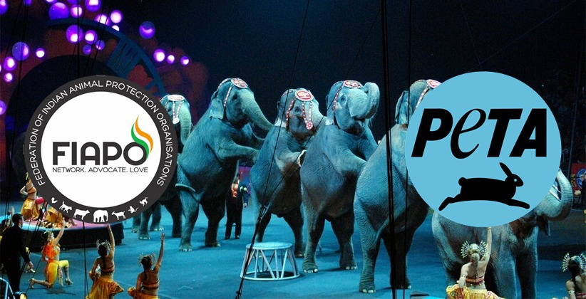 Delhi HC Allows PETA and FIAPO To Participate in Survey Conducted by Animal Welfare Board To Identify Conditions Of Animals In Circuses