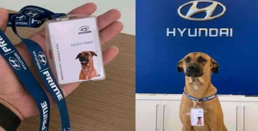 Hyundai Brazil Adopts Local Stray Dog and Calls Him 'Sales Consultant', Netizens Love It