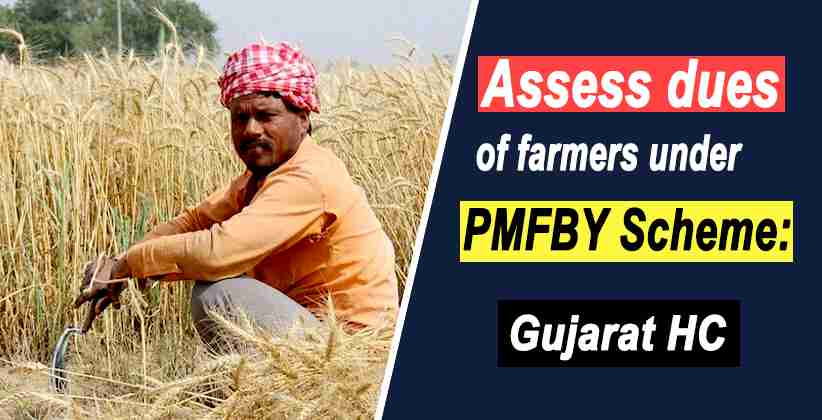 Gujarat HC Requests State Government to Assess if Farmers Covered Under PMFBY Scheme Have Been Paid Their Due Compensation [READ ORDER]