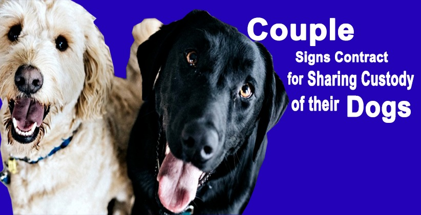 Couple Signs Contract for Sharing Custody oftheir Dogs as Part of Divorce Deal