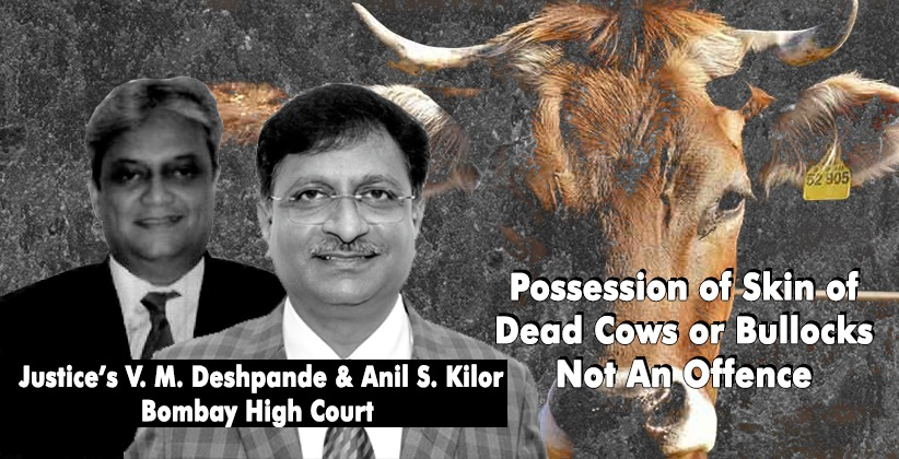 Possession of Skin of Dead Cows or Bullocks Not An Offence: Bombay High Court [READ ORDER]