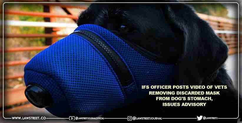 IFS officer posts video of vets removing discarded mask from dog's stomach, issues advisory