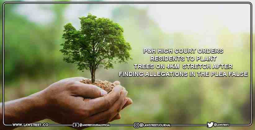P&H High Court Orders Residents To Plant Trees On 4km  Stretch After Finding Allegations In The Plea False